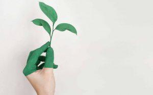 Tee uudenvuodenlupaus ympäristölle – 8 ideaa