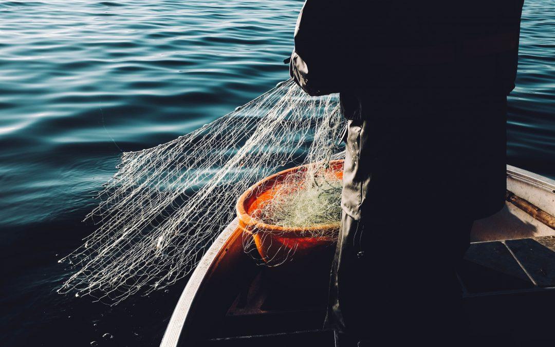 Itämeri puhtaammaksi särkikalaa syömällä